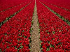 红色唯美图片_大气喜庆的红色