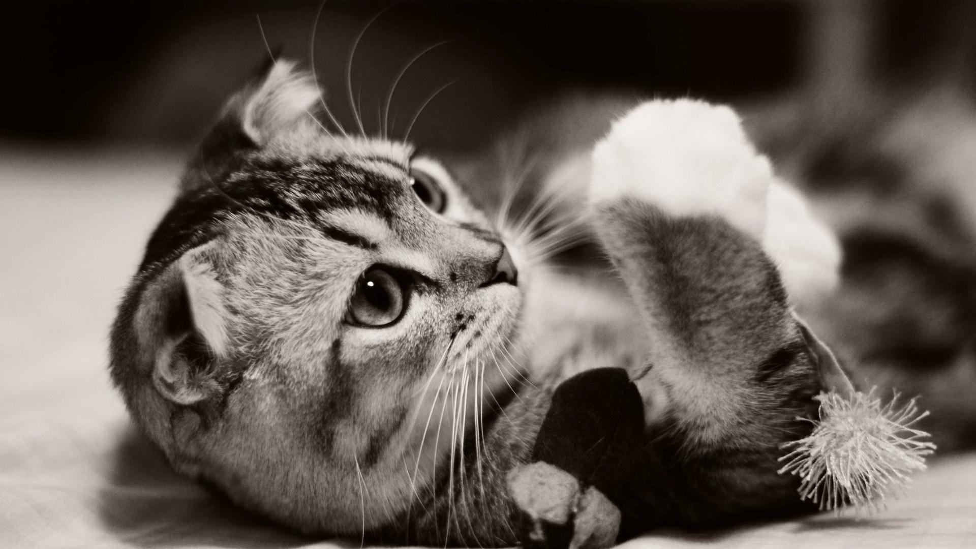 可爱猫咪清新壁纸_最萌的小猫咪