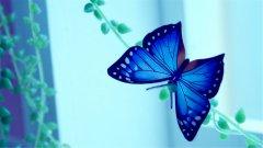 美丽的蝴蝶高清壁纸_飘逸自由的孤蝶