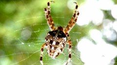 常見毒蜘蛛 蜘蛛圖片大全大圖