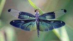 丁丁、螞螂、負勞 高清蜻蜓圖片