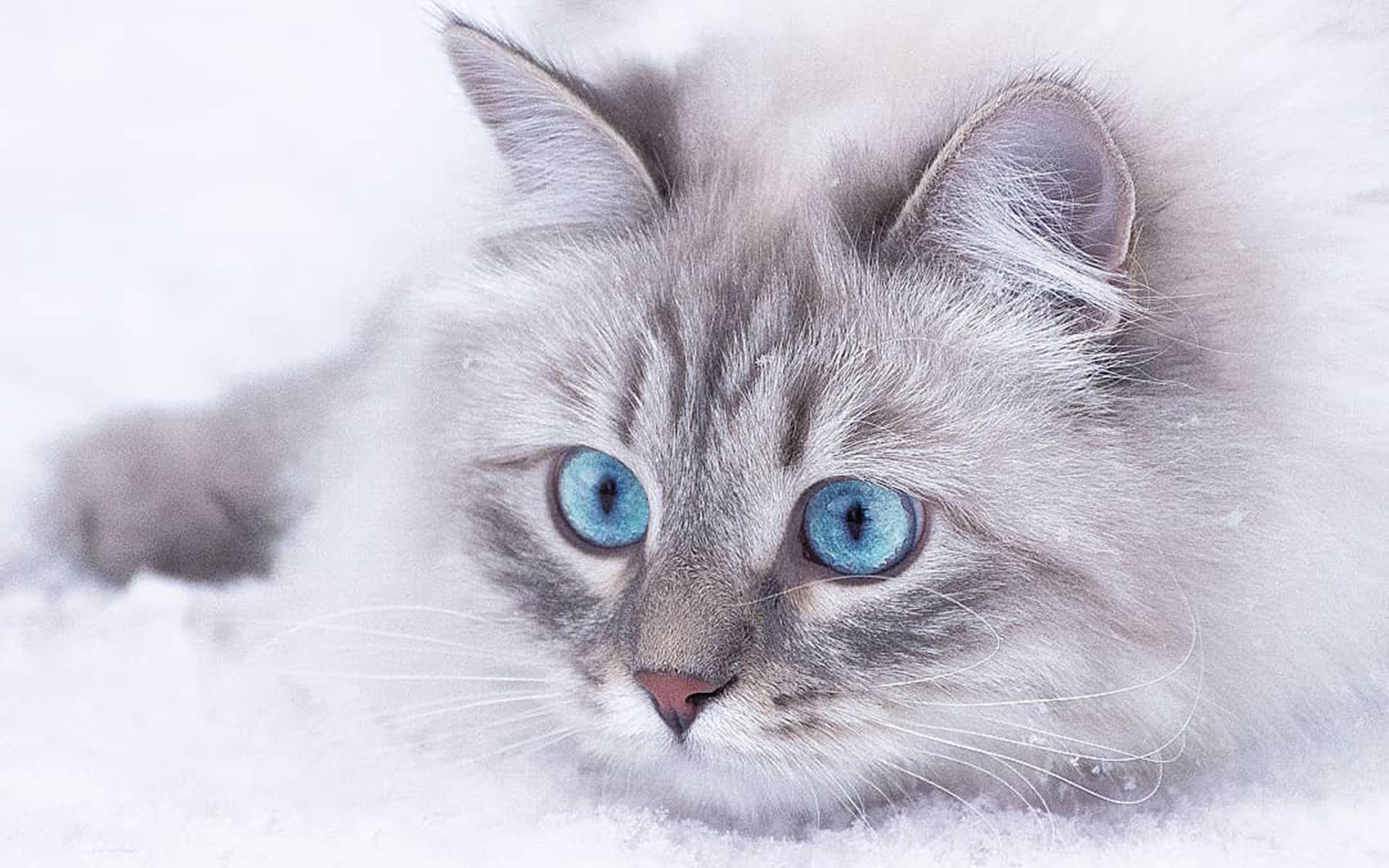 超可爱猫咪清新壁纸_好看的漂亮猫咪