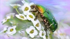 綠色甲蟲 高清綠色甲蟲圖片大全