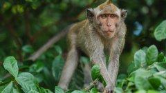 高清野生猴子圖片 山上的野生猴子圖片大全
