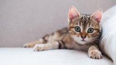 呆萌可愛小貓咪壁紙_有趣可愛喵星人
