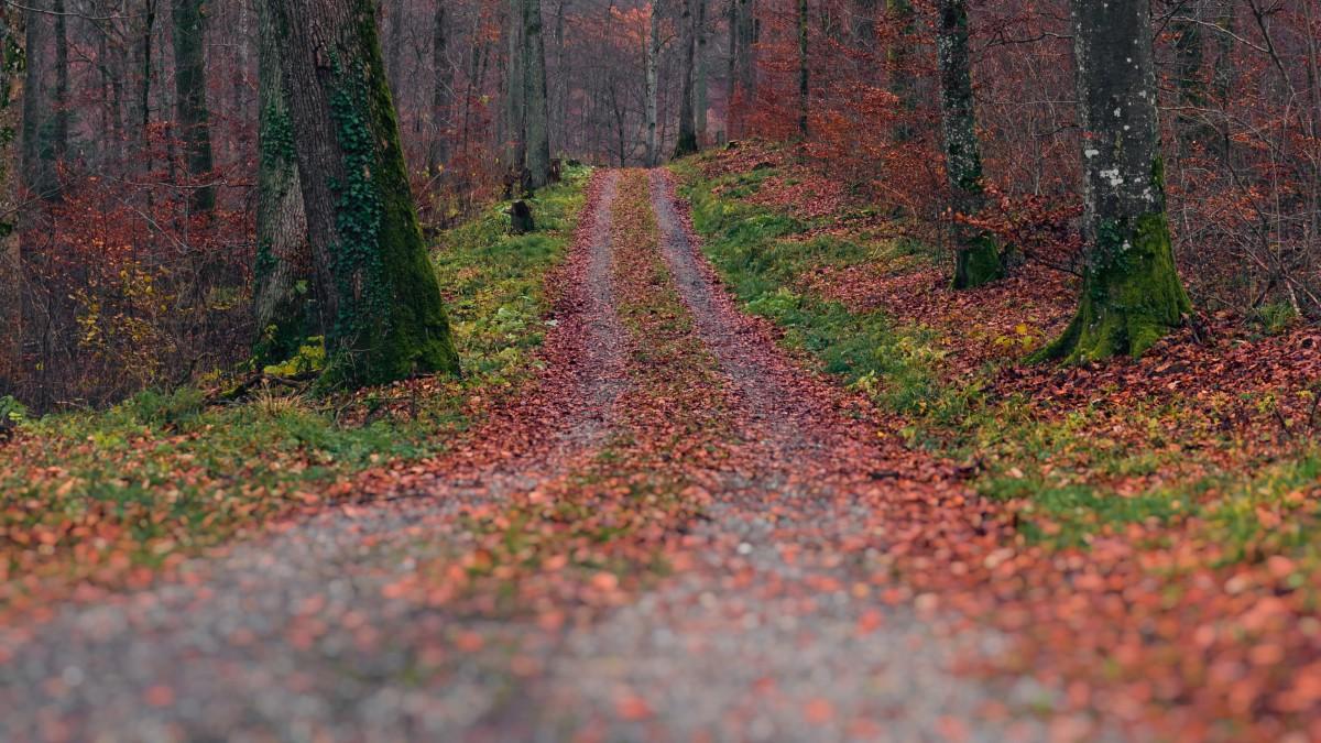 唯美秋天树林落叶图片大全