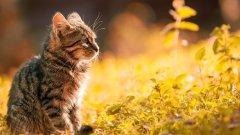 超可愛貓咪呆萌壁紙_慵懶呆萌的可愛貓咪