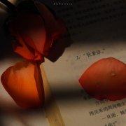 林川/治愈/花朵/光輝/落日/意境/背景圖/壁紙/素材/美景