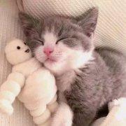 猫咪情侣头像左右超萌小猫情头