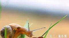 二月二龙抬头清新蜗牛壁纸图片