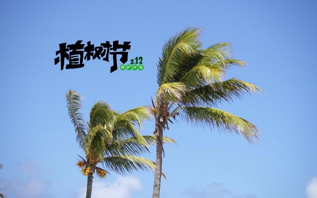 植树节唯美椰子树壁纸图片