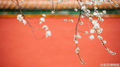春分紫禁城中的李花开了图片