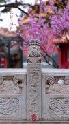 故宫博物院春暖花开你好四月,节日节气图片