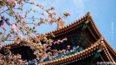 四月群芳斗艳·紫禁城岁时,风景图片