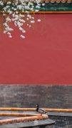 春分之故宫博物院的鸭子图片