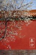 春分节气红墙李花壁纸图片,节日节气图片