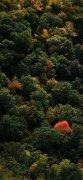 静谧大自然森林风景手机壁纸图片