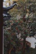 三月江南落花微雨 风景图片