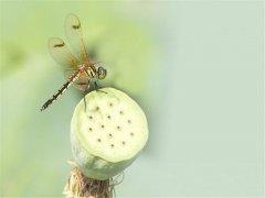 可爱蜻蜓高清手机壁纸图片