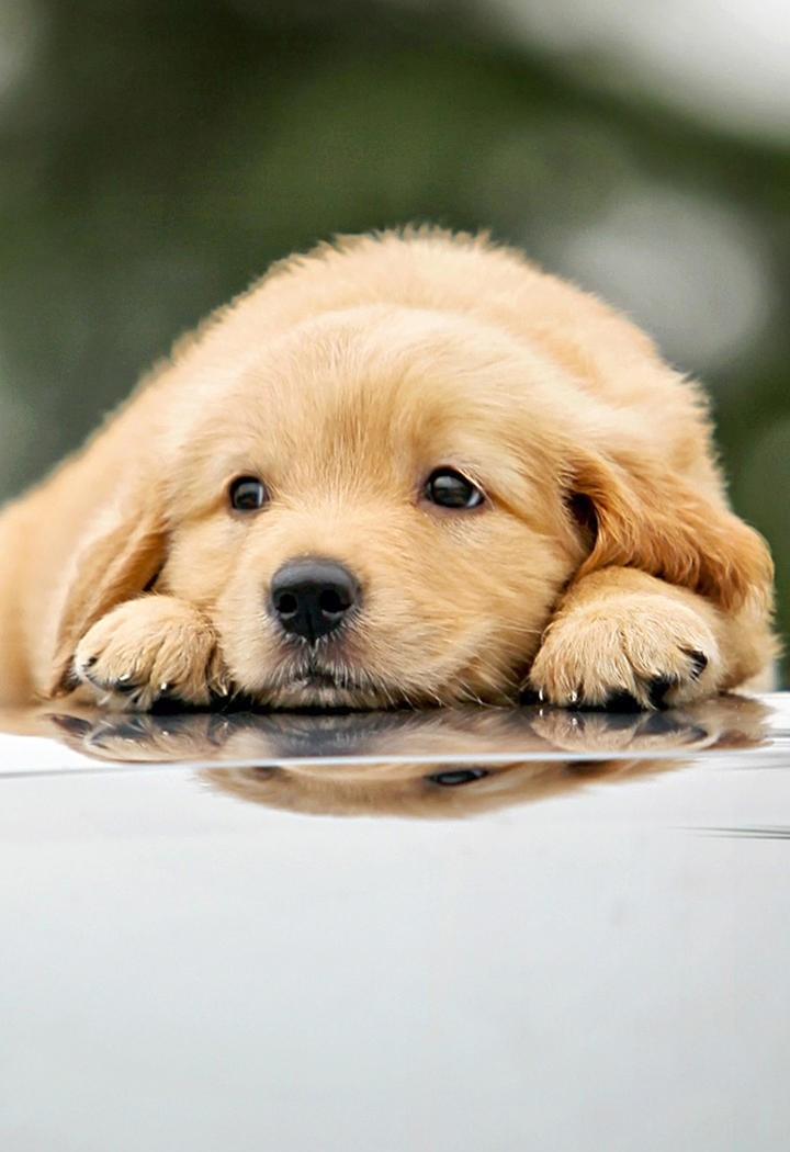 Picture of little golden dog with palm