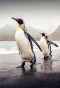 可爱动物企鹅图片