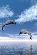 欢乐的海豚图片