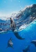 一群海豚图片