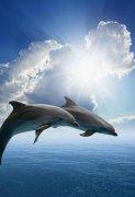 两条跳出水面的海豚图片