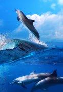 美女与海豚图片