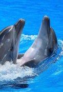 高清浪花中的海豚图片