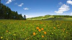 绿色草甸草原养眼风景图片