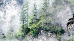 雾气缭绕的山林图片