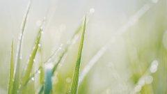 沾满雨露的草丛图片