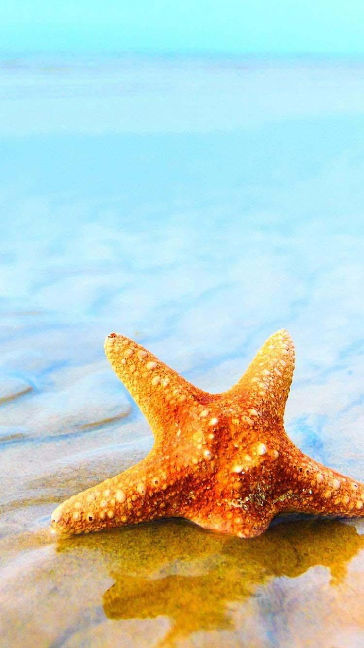 夏天沙滩上唯美海星手机壁纸图片