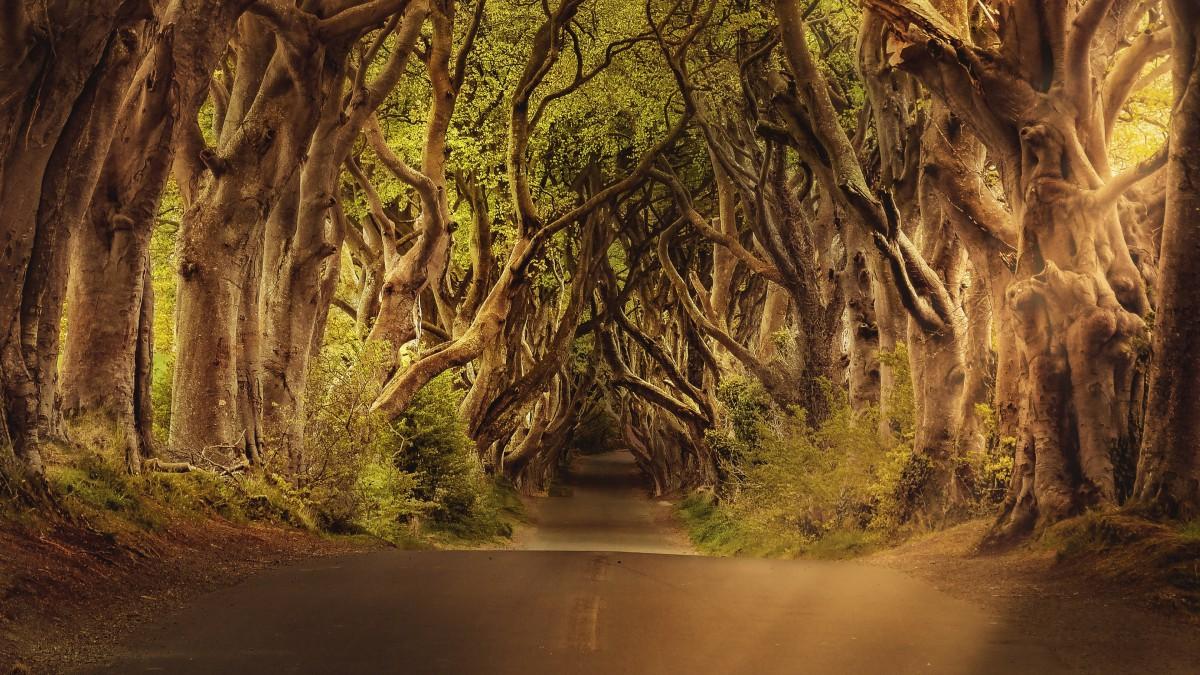 幽静的树林小路图片
