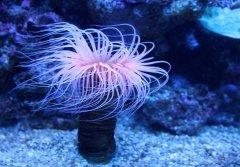海底珊瑚唯美图片