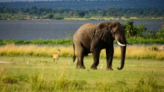 高大的大象图片