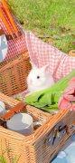 超级可爱的小兔子图片