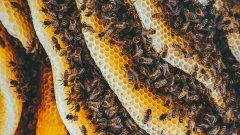 蜂巢图片大全