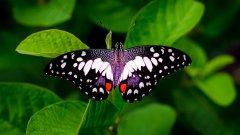 树叶上的蝴蝶图片