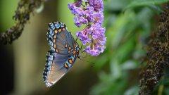 唯美蝴蝶图片大全