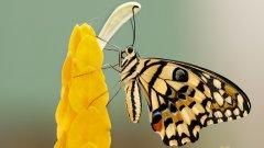 高清蝴蝶图片大全大图