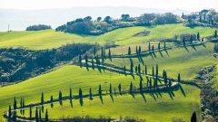 高清绿色的田野图片