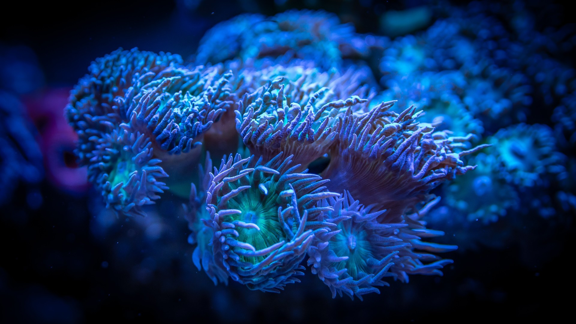 The most beautiful underwater world picture wallpaper