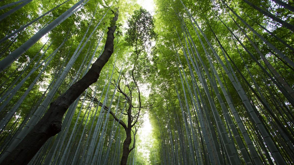 优美的竹林图片