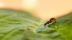 蚂蚁图片高清大图